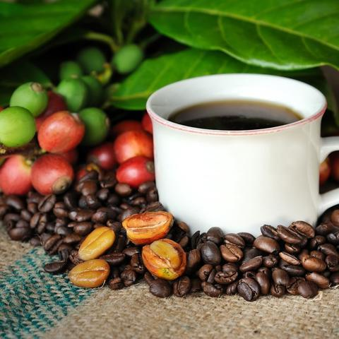Why is Kona Coffee From Hawaii So Unique?